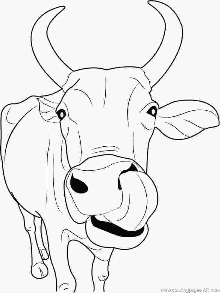 cow coloring sheets best 25 cow coloring pages ideas on pinterest free