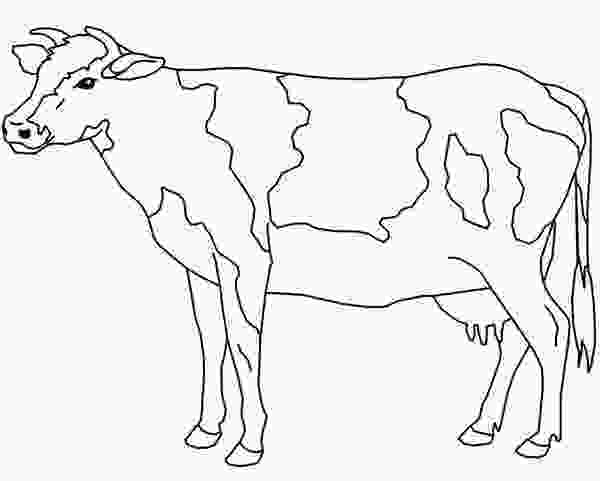 cow coloring sheets free cow coloring pages printable