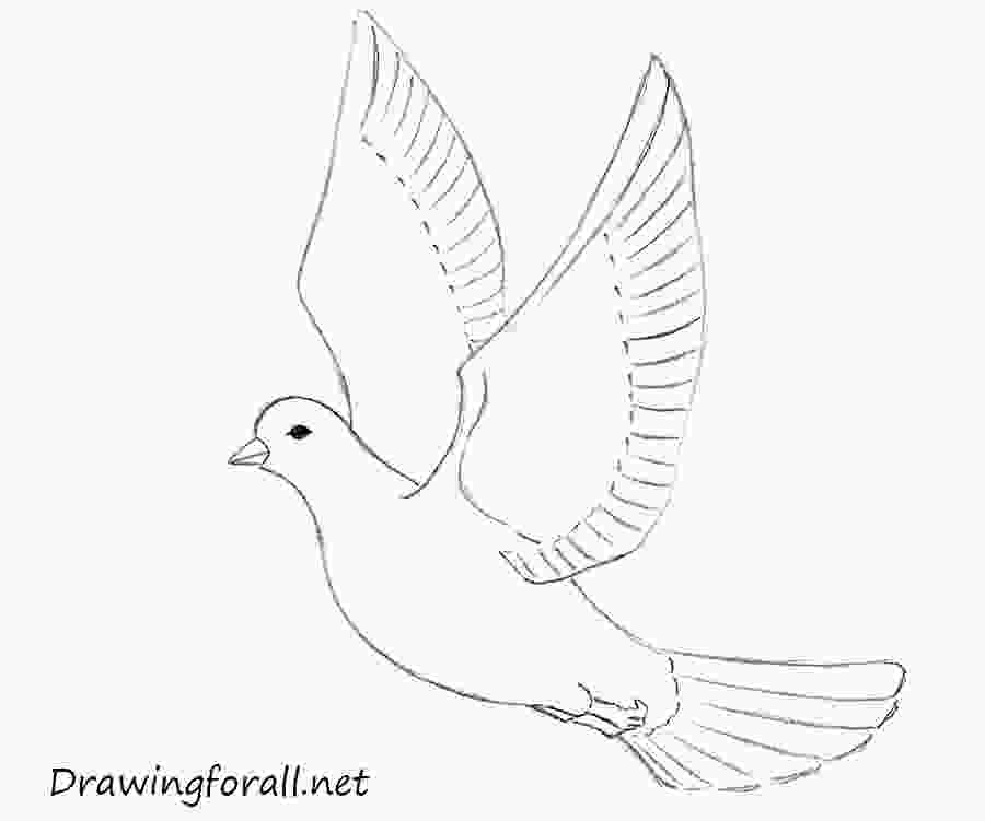 how to draw a dove how to draw a dove for beginners drawingforallnet