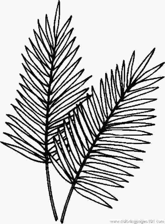 palm leaves coloring pages palm leaf 1997 britishsoftware