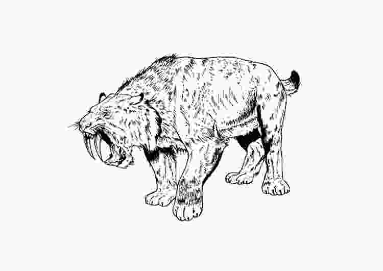 saber tooth tiger coloring pages coloring page saber tooth tiger img 9106 images