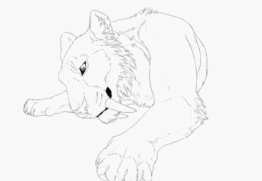 saber tooth tiger coloring pages sabertooth lineart by kium on deviantart