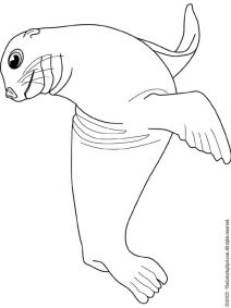 sea lion for coloring sea lion lions for fred lion coloring pages ocean