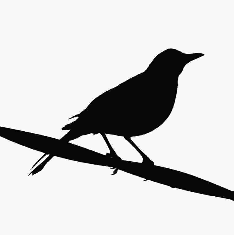 black bird silhouette free blackbird cliparts download free clip art free clip