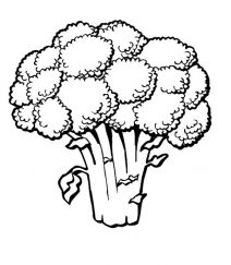 coloring images of vegetables green vegetable coloring page food pinterest