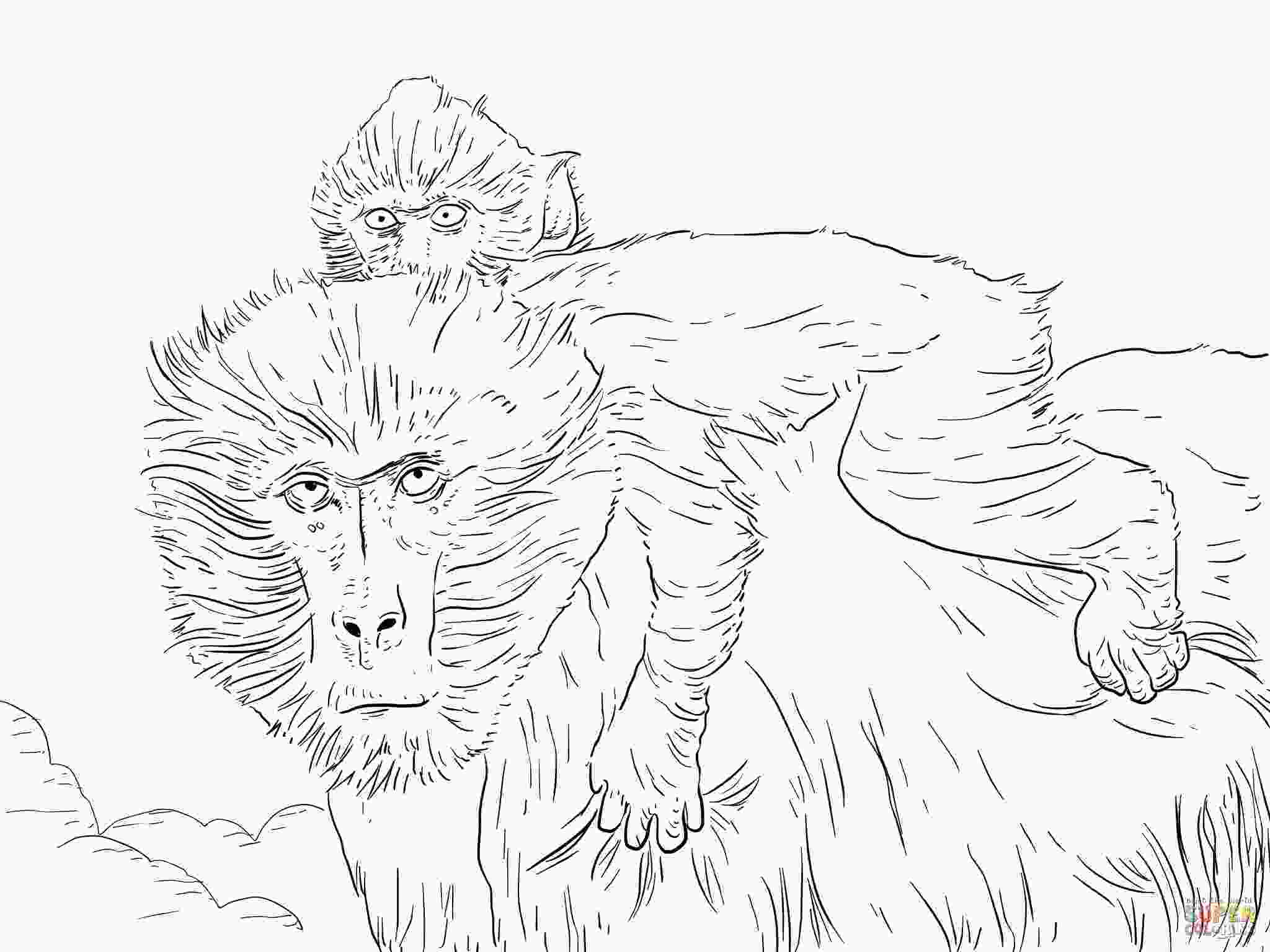 coloring pages baboon coloring pages download and print for free