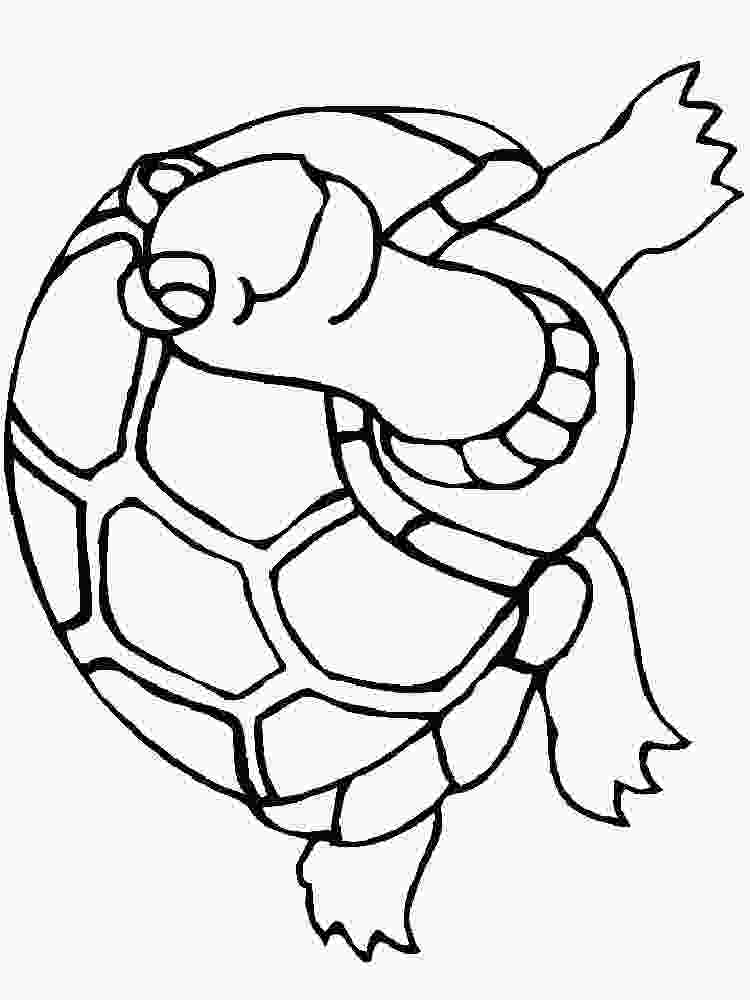 coloring pages turtles turtles coloring pages download and print turtles coloring pages