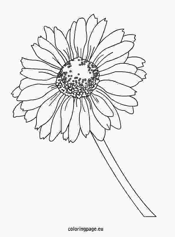 daisy coloring pages daisy coloring page coloring page