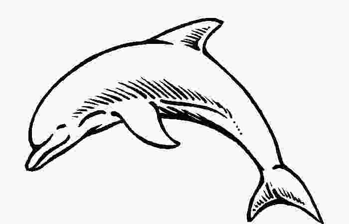 dolphin template printable dolphin template animal templates free amp premium templates