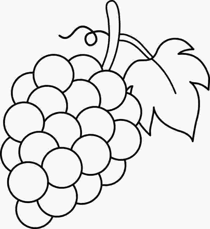 drawing grapes bunch of grapes drawing at getdrawingscom free for