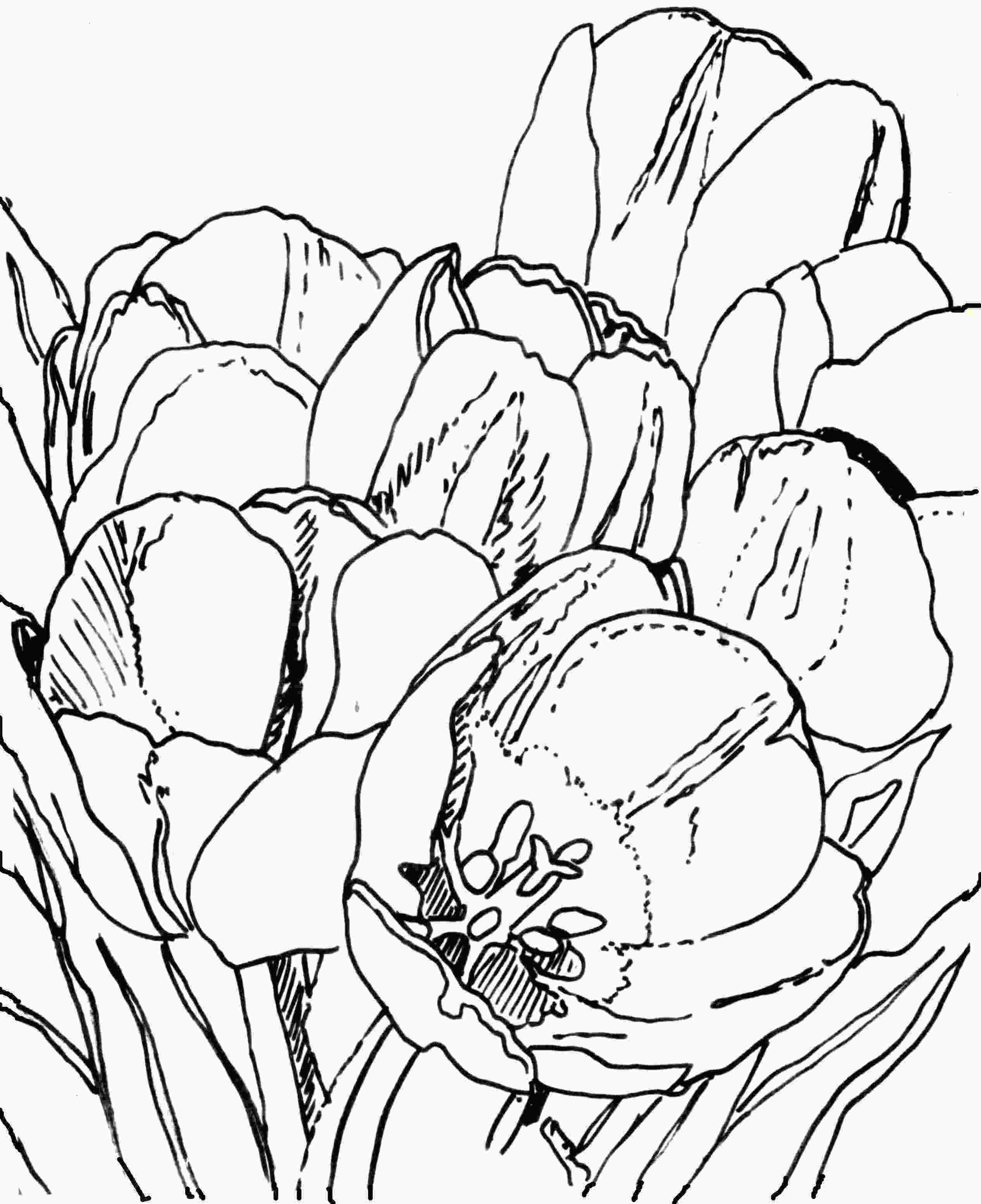 drawing tulips angies art lesson 2