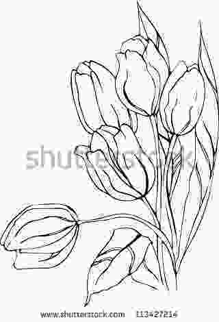drawing tulips hand drawn tulips vector pottery in 2019 tulip