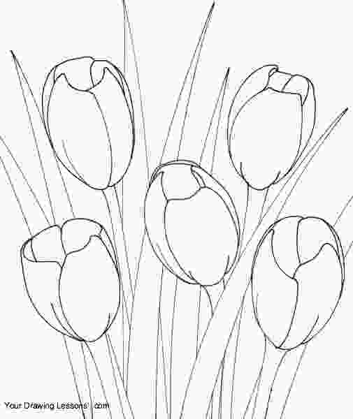 drawing tulips how to draw tulips tulipany pinterest tulip how to