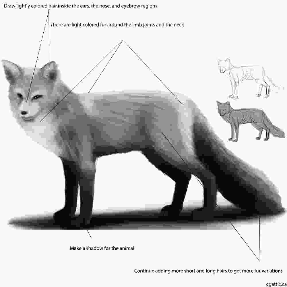 fox drawing realistic fox drawing in 4 steps with photoshop