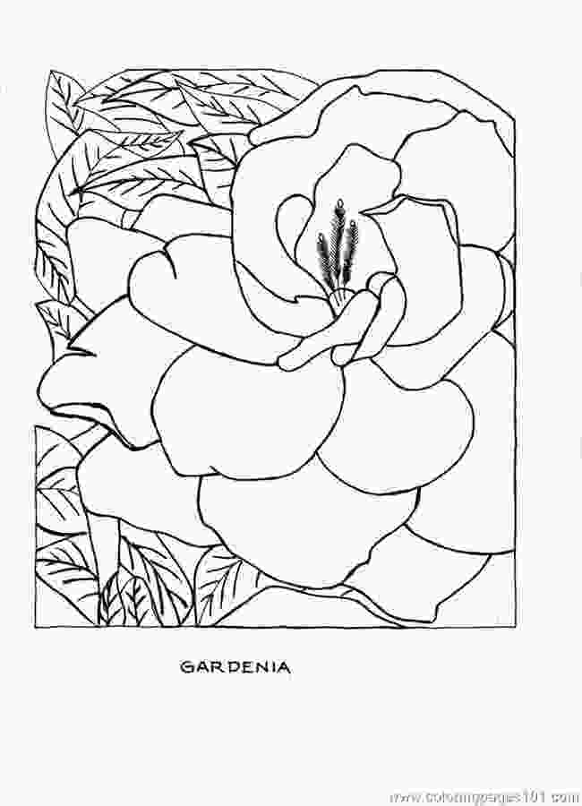 full page coloring pages r coloring page gardenia full printable coloring page for
