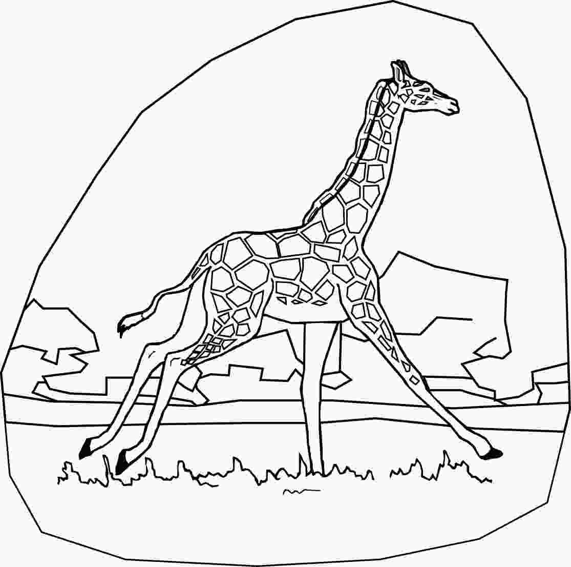 giraffe pictures to color free printable giraffe coloring pages for kids