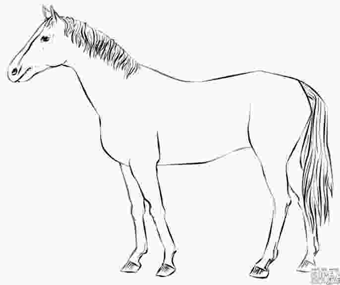 how to draw a horse standing 17 best images about warmups on pinterest step by step