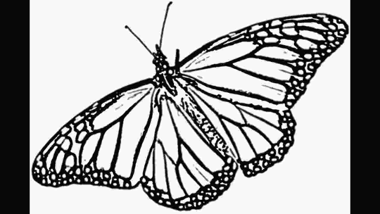 monarch butterfly drawing 3d butterfly drawing at getdrawingscom free for