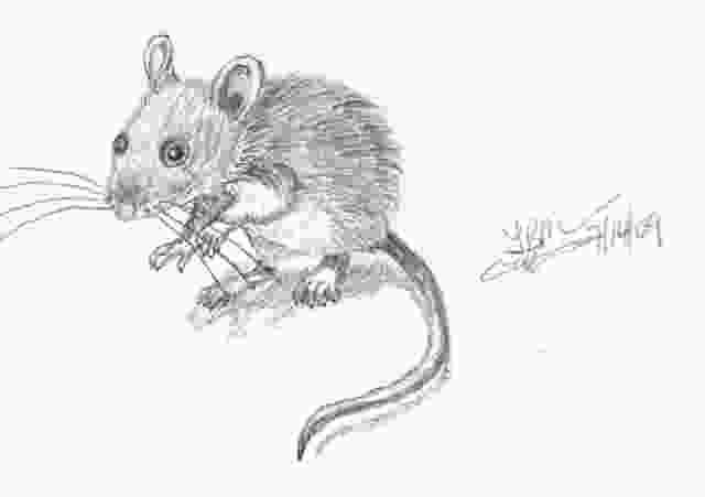 mouse drawings drawings geek and dads blog