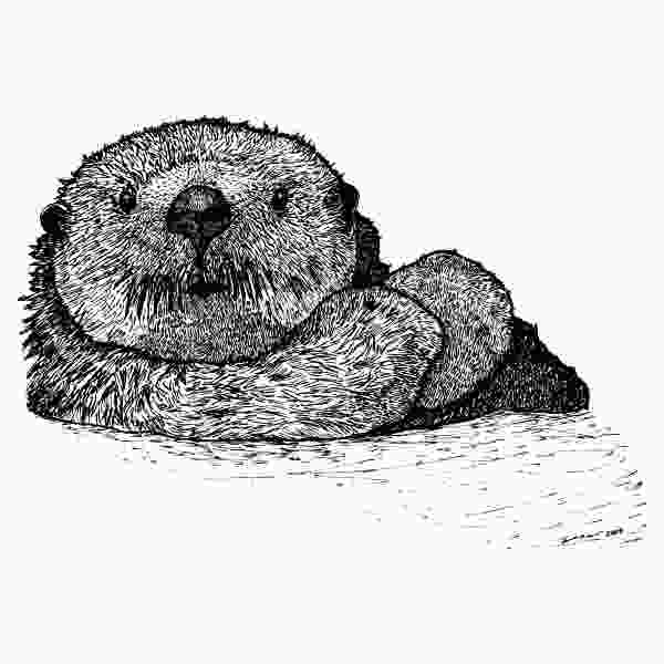 otter sketch sea otter by karl addison
