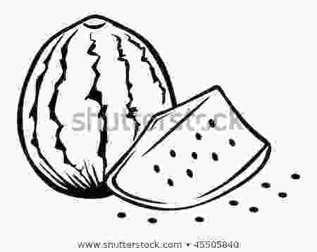 outline picture of watermelon cartoon vector outline illustration watermelon 45505840