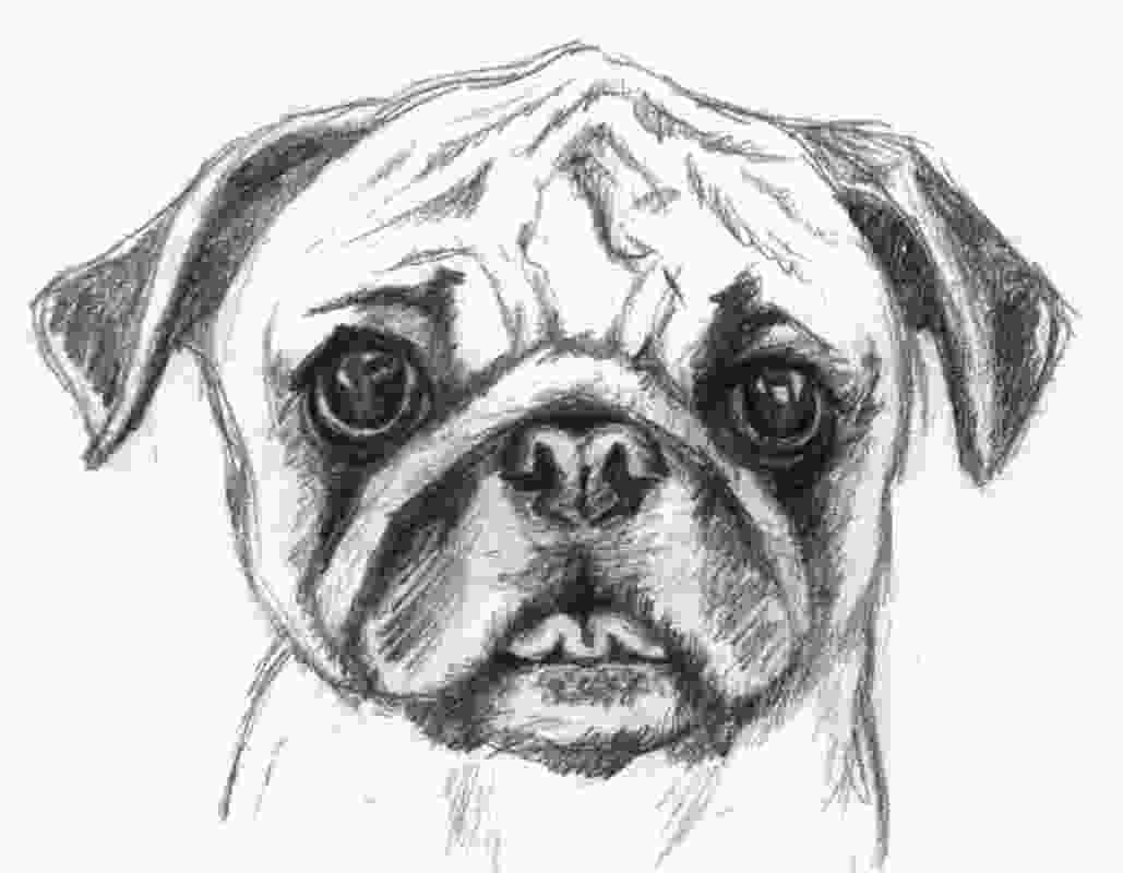 realistic cute dog coloring pages 1000 images about coloring or pencil coloring on