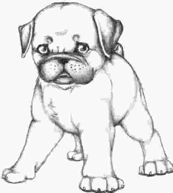 realistic cute dog coloring pages coloring style and folk on pinterest