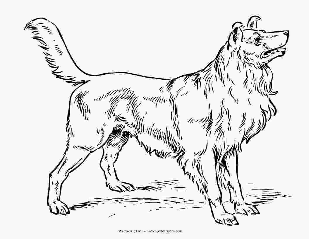 realistic cute dog coloring pages dog my coloring land