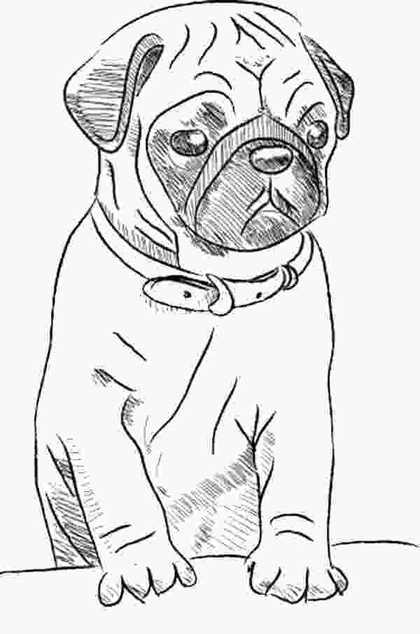 realistic cute dog coloring pages free printable drawing pages of cute pugs google search