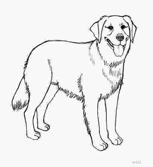 realistic cute dog coloring pages realistic golden retriever coloring pages photo happy