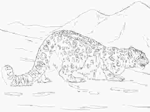 snow leopard coloring pages snow leopard hunting coloring page free printable
