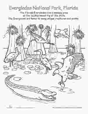swamp coloring pages everglades national park trips parks and coloring