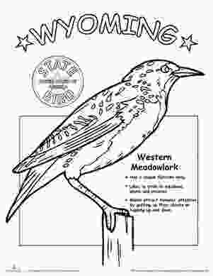 tennessee state bird 17 best images about school social studies on pinterest