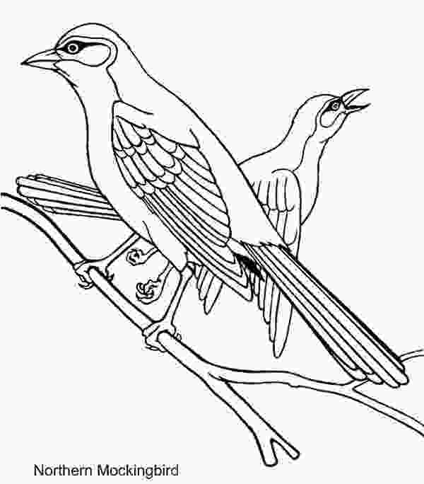 tennessee state bird mockingbird coloring download mockingbird coloring for