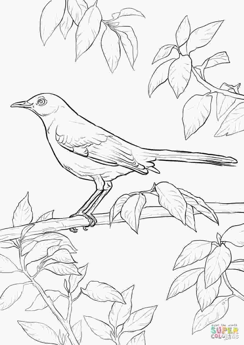 tennessee state bird northern mockingbird coloring page free printable
