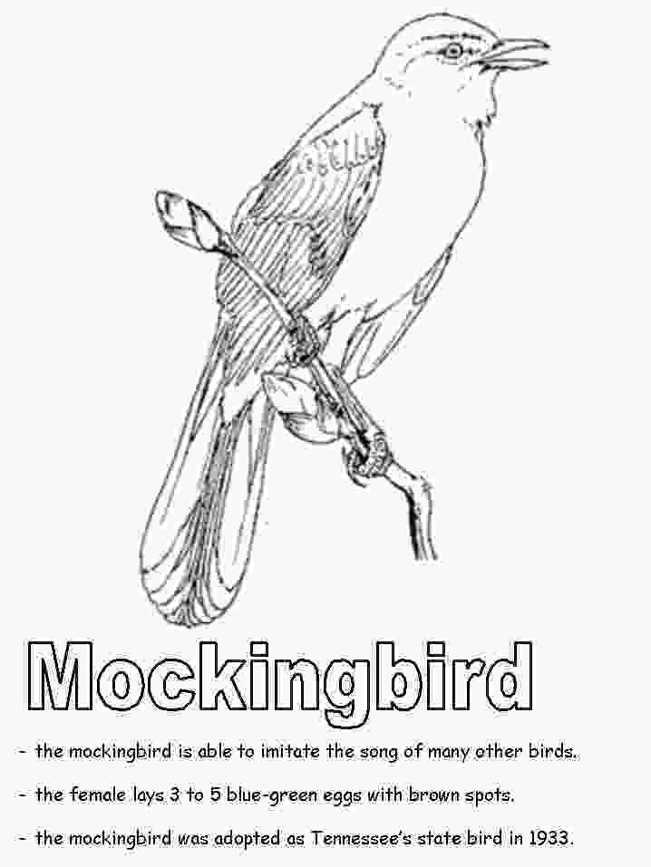 tennessee state bird tennessee state bird mockingbird coloring page teaching
