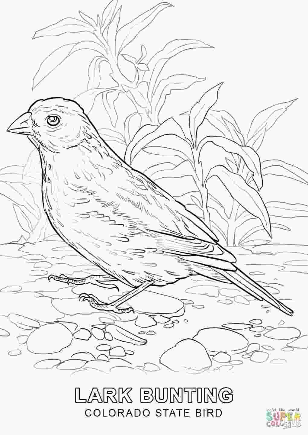 tennessee state bird tennessee state tree coloring page coloring pages