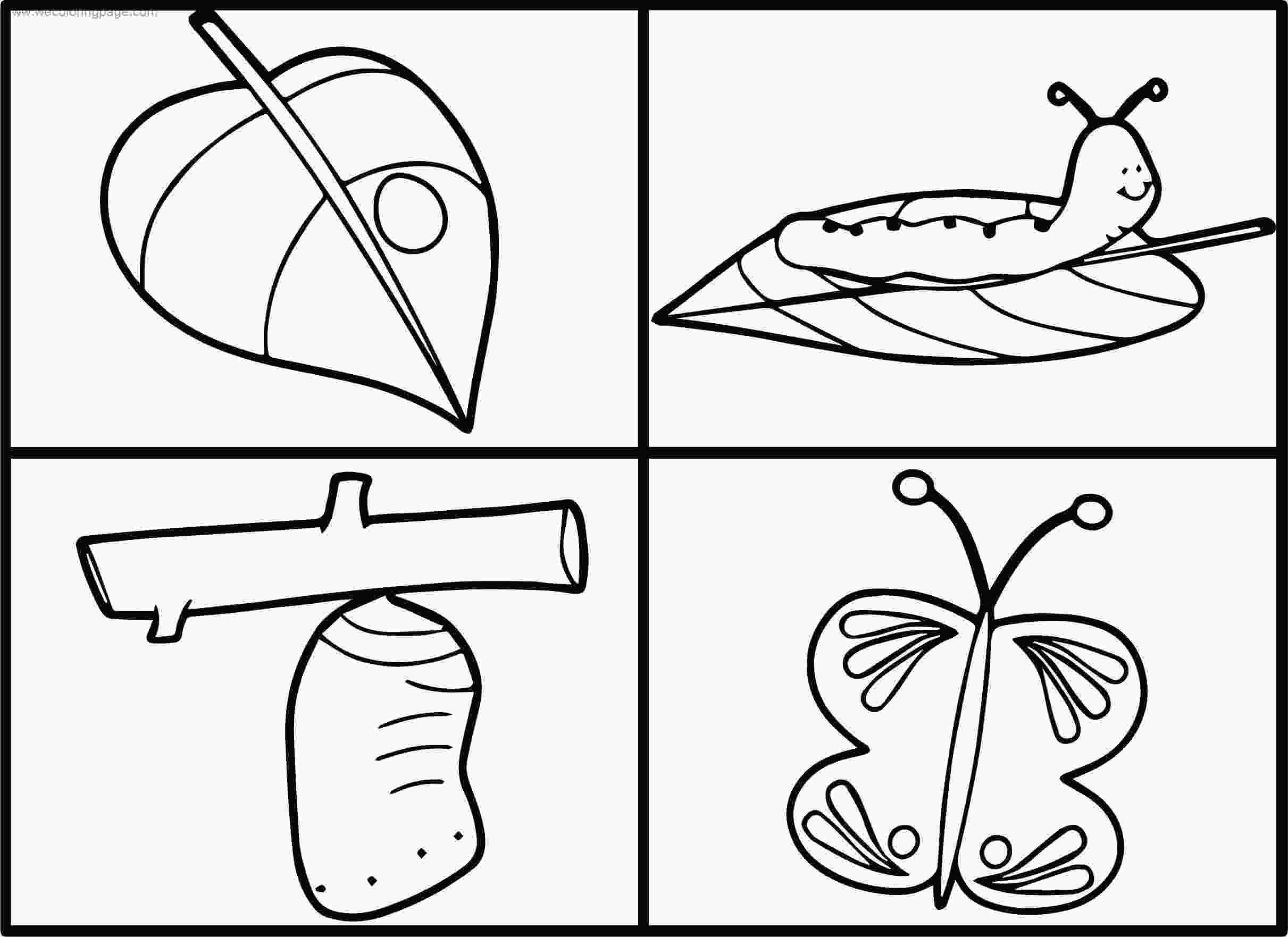 animal life cycle coloring pages life cycle butterfly coloring page wecoloringpagecom