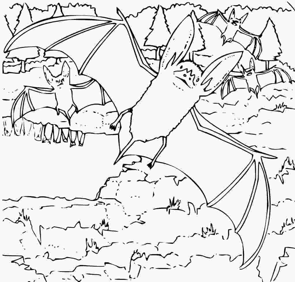 bat coloring pages free printable bat coloring pages for kids