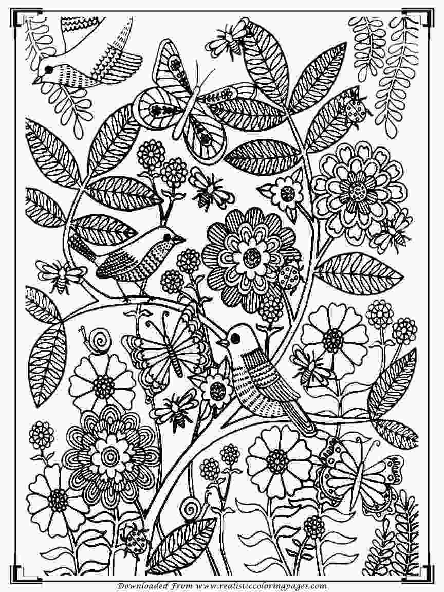 bird printable coloring pages printable birds coloring pages for adults realistic 1