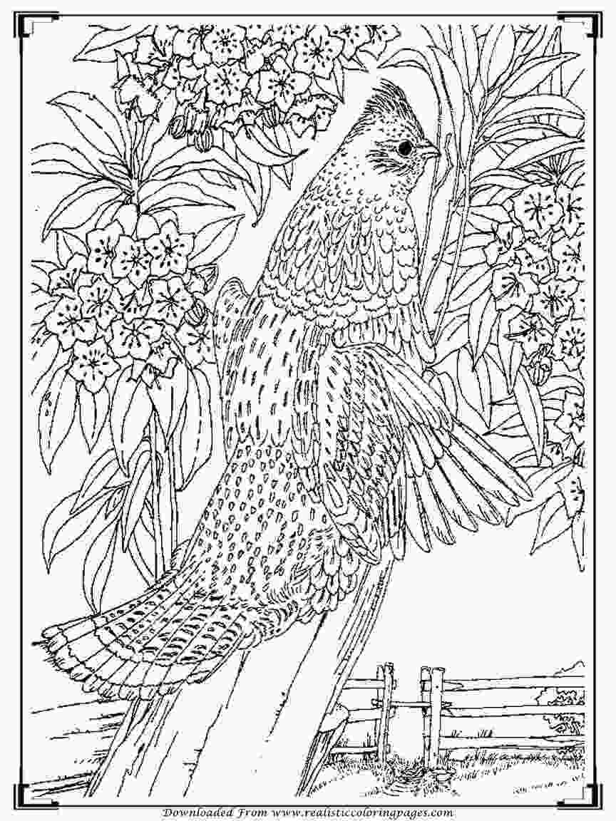 bird printable coloring pages printable birds coloring pages for adults realistic