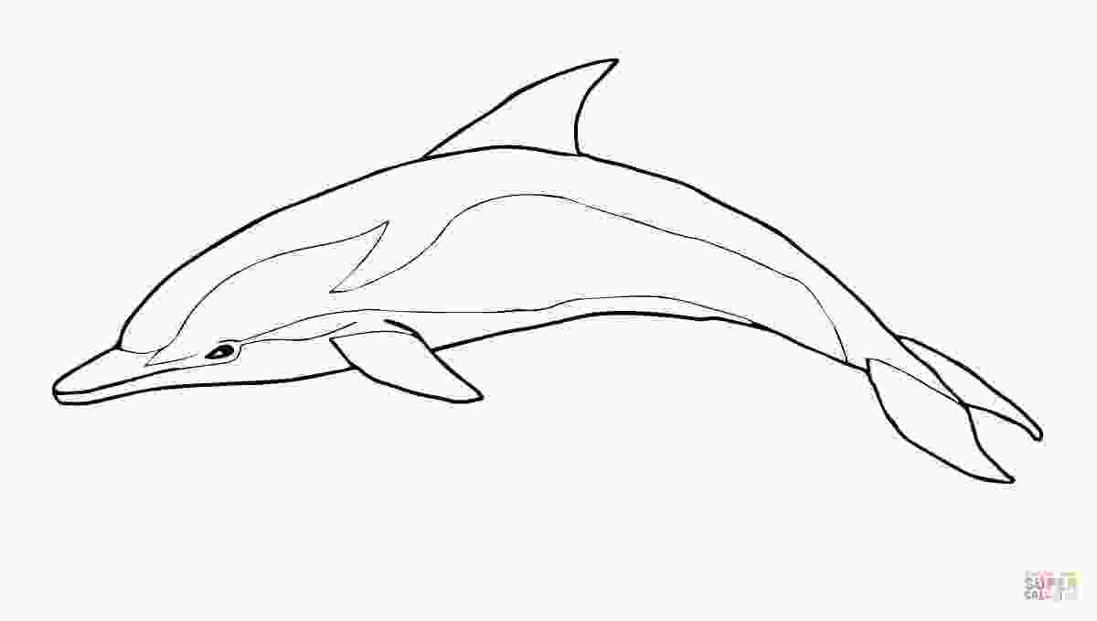 bottlenose dolphin pictures printable bottlenose dolphin cartoon coloring pages print coloring