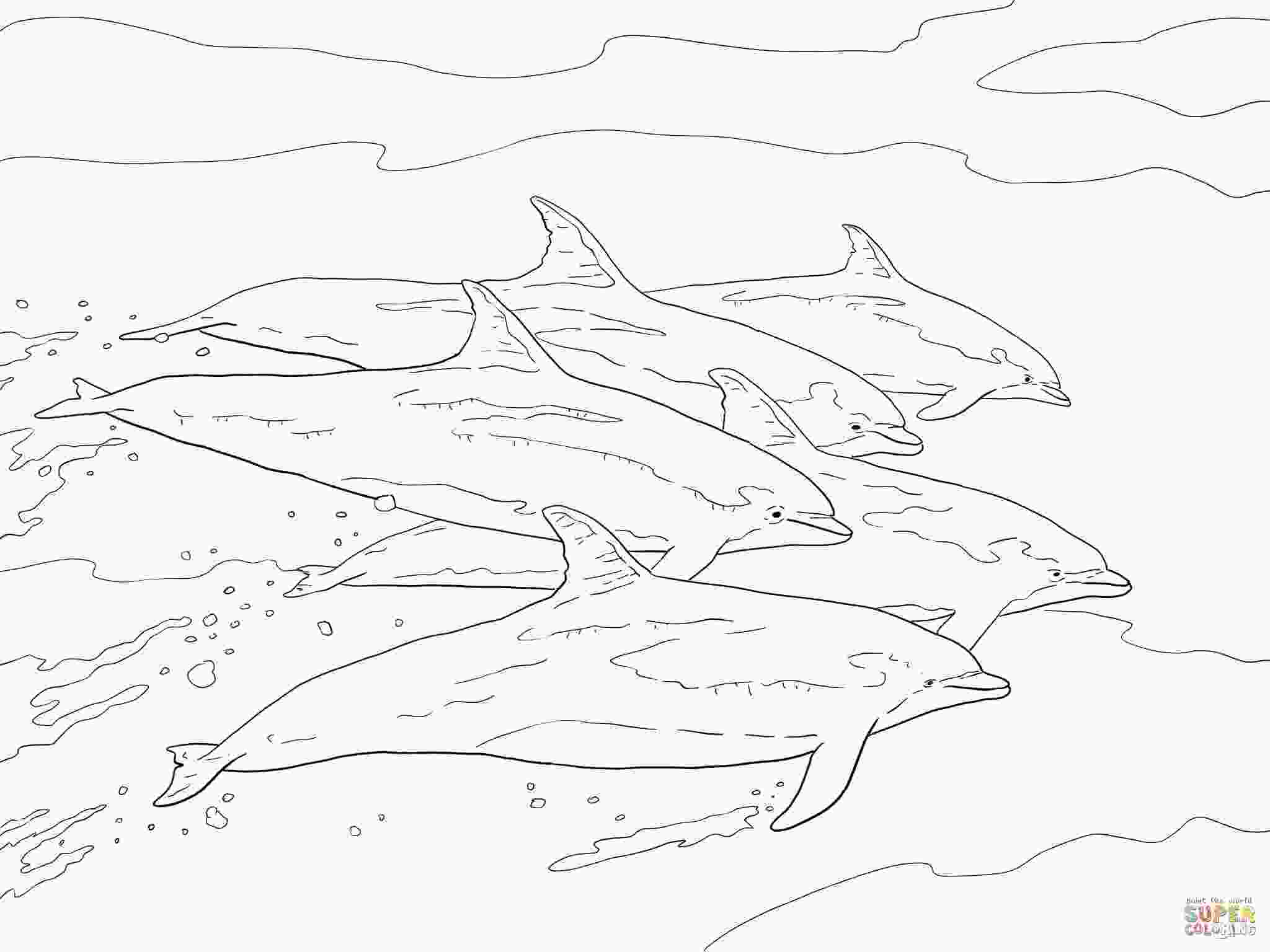 bottlenose dolphin pictures printable bottlenose dolphins school coloring page free printable