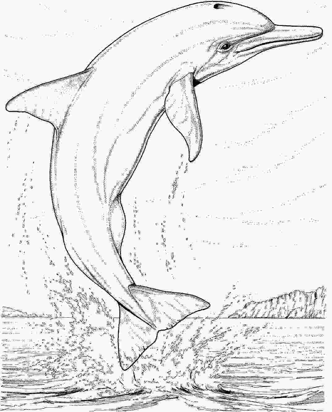 bottlenose dolphin pictures printable dolphin coloring pages