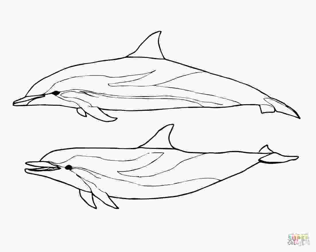 bottlenose dolphin pictures printable spinner dolphin coloring download spinner dolphin coloring