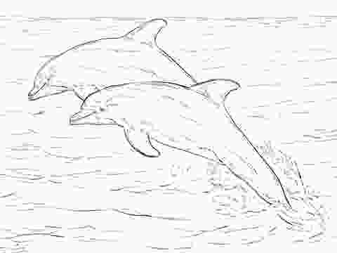 bottlenose dolphin pictures printable two atlantic bottlenose dolphins coloring page work