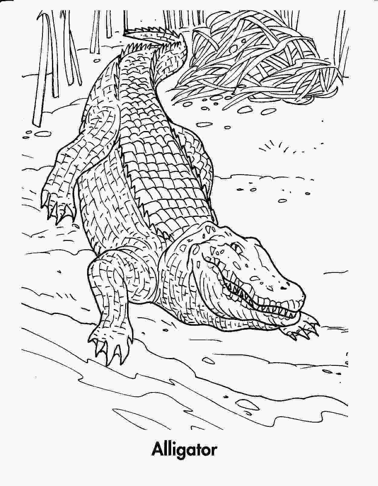 crocodile coloring free printable crocodile coloring pages for kids 1