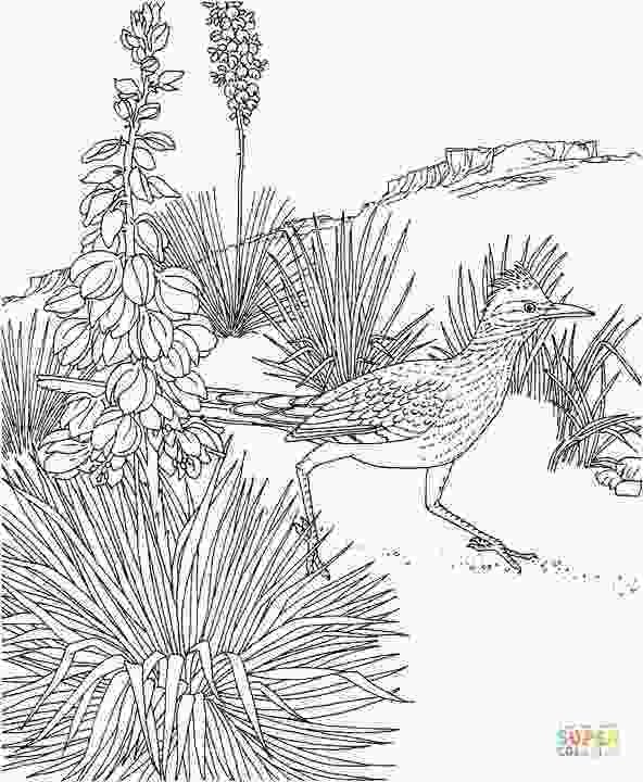 cuckoo bird pictures color roadrunner and yucca new mexico state bird and flower