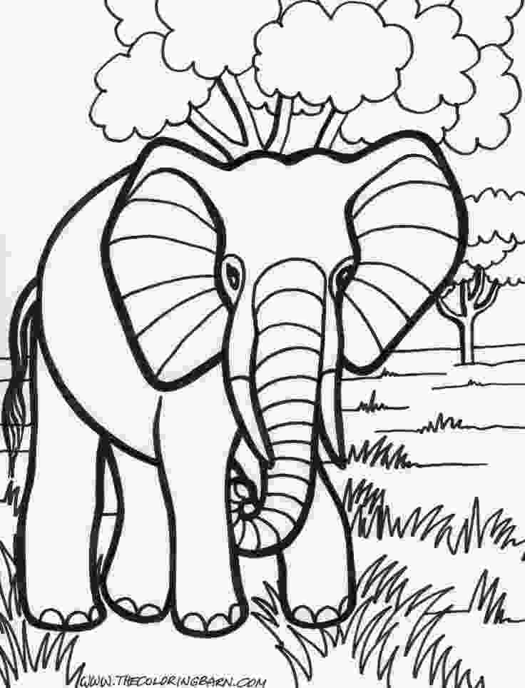 elephant coloring sheets 24 best y blank pattern elephants images on pinterest