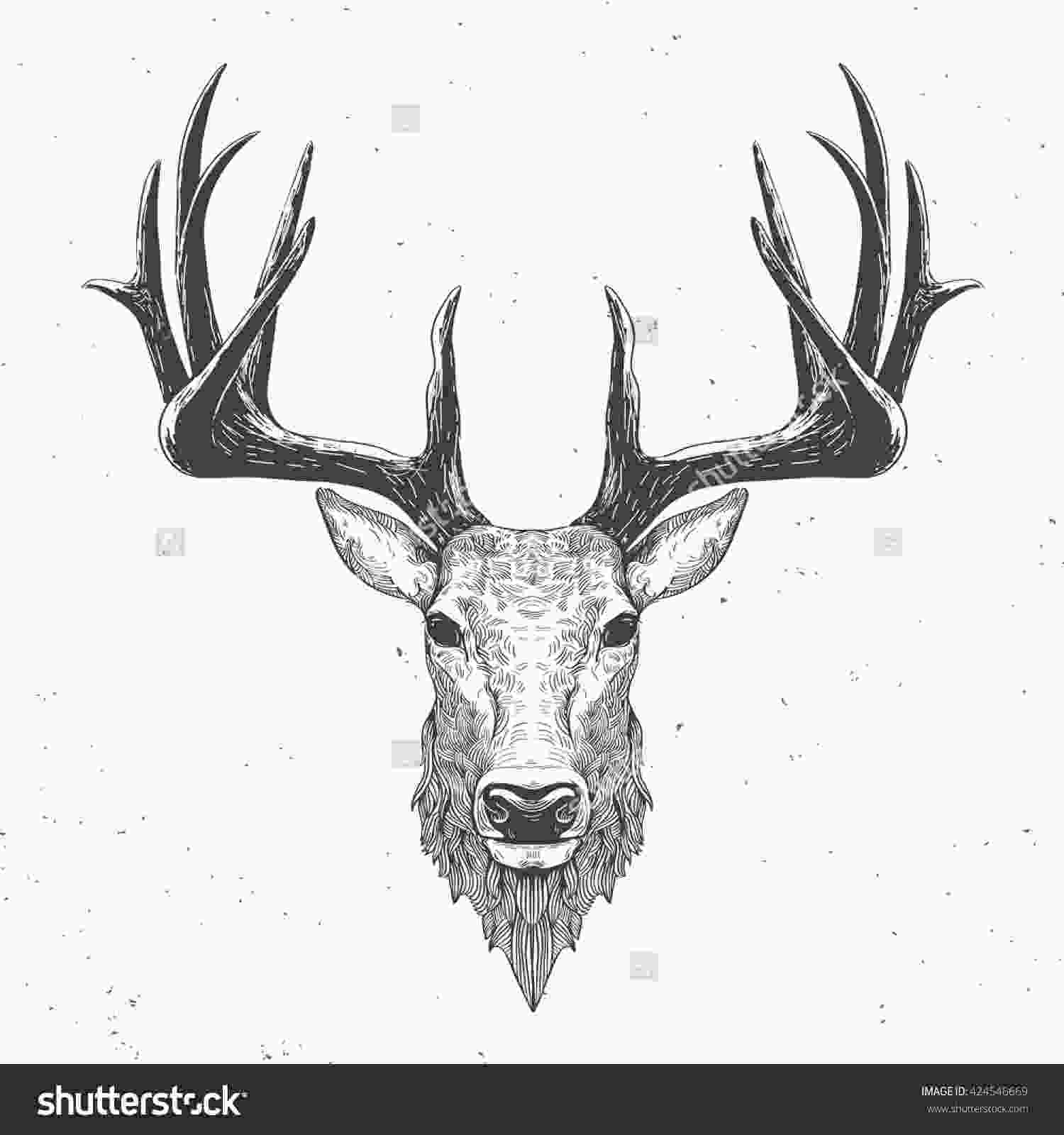 how to draw a deer head deer head on white hand drawn vintage illustration lax